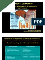 Estructura Microscopica de La Madera