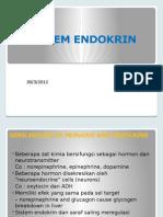 Sistem Endokrin 2