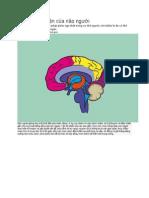 Khả Năng Vô Tận Của Não Người