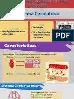 s.circulatorio