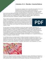 2011. Los Primeros Intentos. H. L. Morales. Características Esenciales Del DA