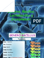 Bacillus, Lactobacillus y Erysipelothrix