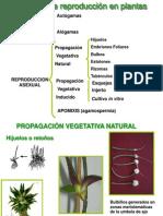 treproduccion sexual y asexual en plantas .pdf