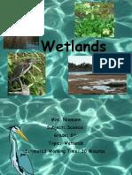 grades 5-8 wetlands sim