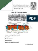 Tipos de transporte celular.docx
