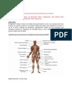Importancia de Los Musculos Del Torso