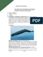 Mamiferos marinos.doc