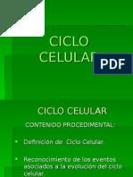 Ciclocelular Clase 3 (1)