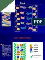 Propiedades Fisicoquimicas Del DNA