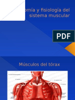 Músculos principales de la espalda, torax