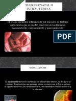 Edad Prenatal o Intrauterina