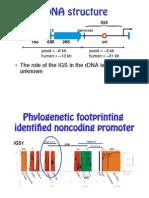 L22 Genome Evolution 15 (1)