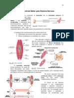 Controlo Motor Pelo Sistema Nervoso
