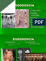 1 anatomía interna del organo dentario