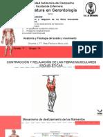Anatomia Primer Semestre