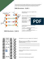 dna structure teacher handout