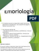 Embriologia Tejido Muscular