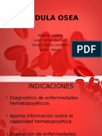 Citologadelamedulasea 141009231852 Conversion Gate02