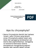 planktonology  CHRYSOPHYTA