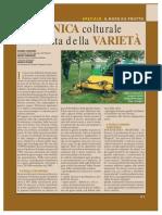 nocegiu04.pdf