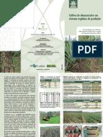 Folder Cultivo Abacaxi