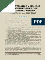 Sintomatologia y Manejo de Enfermedades Del Maiz en Region Noa