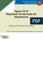 Regulação da secreção de aldosterona.pps
