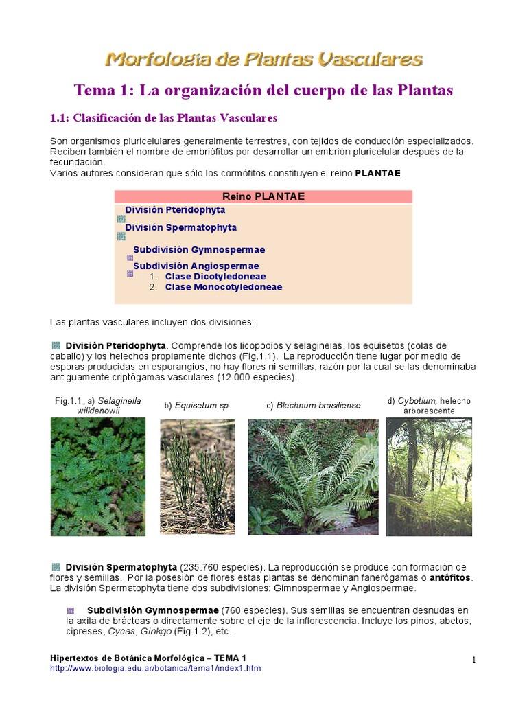 Apuntes de Botanica