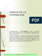 EXPOSICION DE cyperaceae.pptx