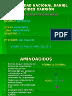 BIOQUÍMICA DE LOS AMINOÁCIDOS. UNDAC