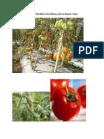 Materi Persilangan Tomat