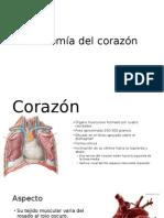 Anatomia Cardiologica