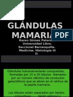 glandulasmamariass-110607222921-phpapp01