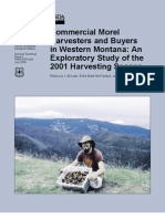 Commercial Morel  Harvesters and Buyers  in Western Montana