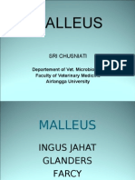 Malleus 11
