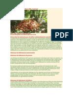 Nutricion Mineral Del Cacao