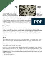 8 Manfaat Semut Jepang Bagi Kesehatan