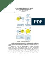 Mekanisme Hipersensitivitas Tipe IV