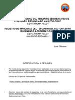 Terciario Sedimentario Lonquimay Chile