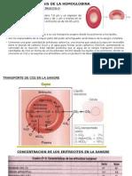 Sintesis de La Hemoglobina