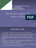 Producción Cabras de Leche en Chile