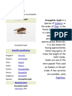 Drosophila Hydei