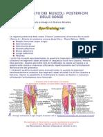 documento allenamento muscoli posteriori coscia