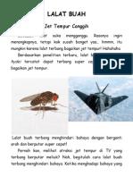 lalat buah bagai jet tempur.pdf