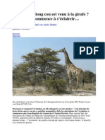 Comment Le Long Cou Est Venu à La Girafe