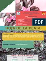 Hoja de La Plata