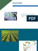 Presentacion Plantas Transgenicas.docx
