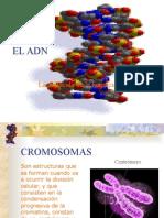 ADN sintesis