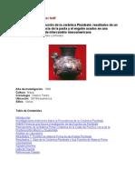 Héctor Neff, Producción y Distribución de La Cerámica Plumbate