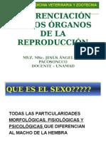 "DIFERENCIACIÃ""N-SEXUAL - copia.ppt"